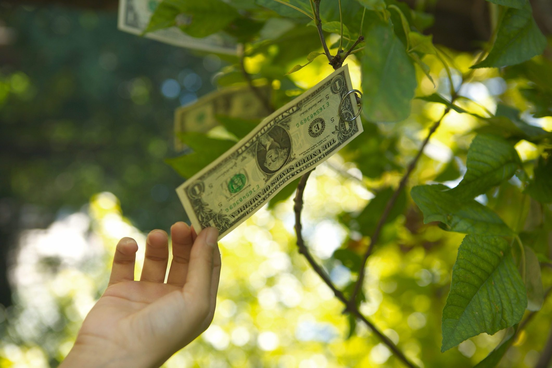 Money Doesn't Grow on Trees and Other Facts About Currency